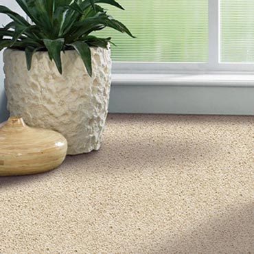 Shaw Carpet Bellera Collection | Corning, NY